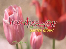 How-Does-Your-Garden-Grow